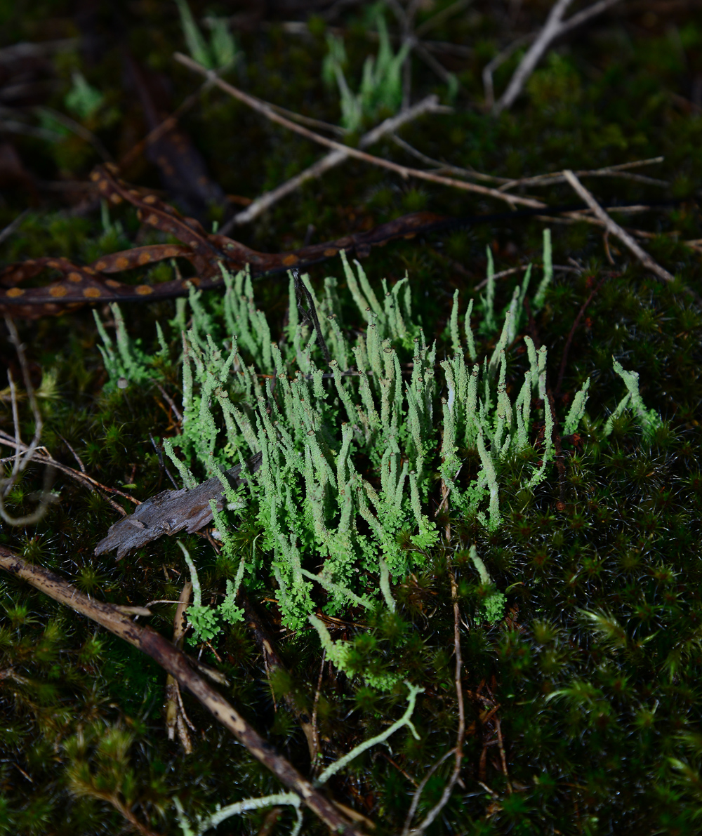 No. 3  Moss covered stems