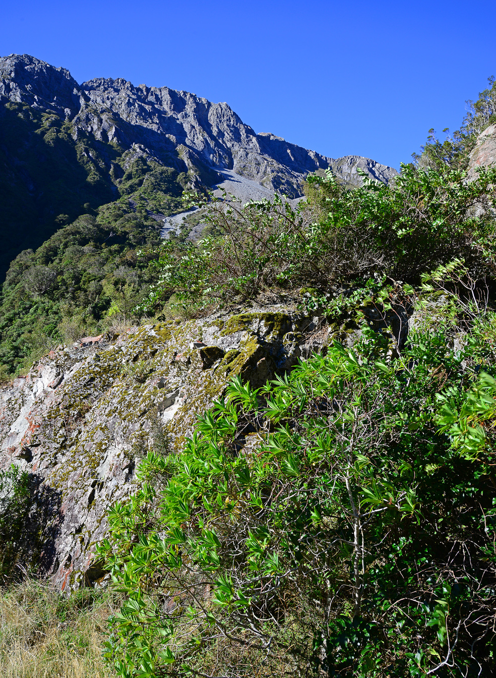 No. 9  Hebe native in foreground, Arthurs Pass view near Otira.