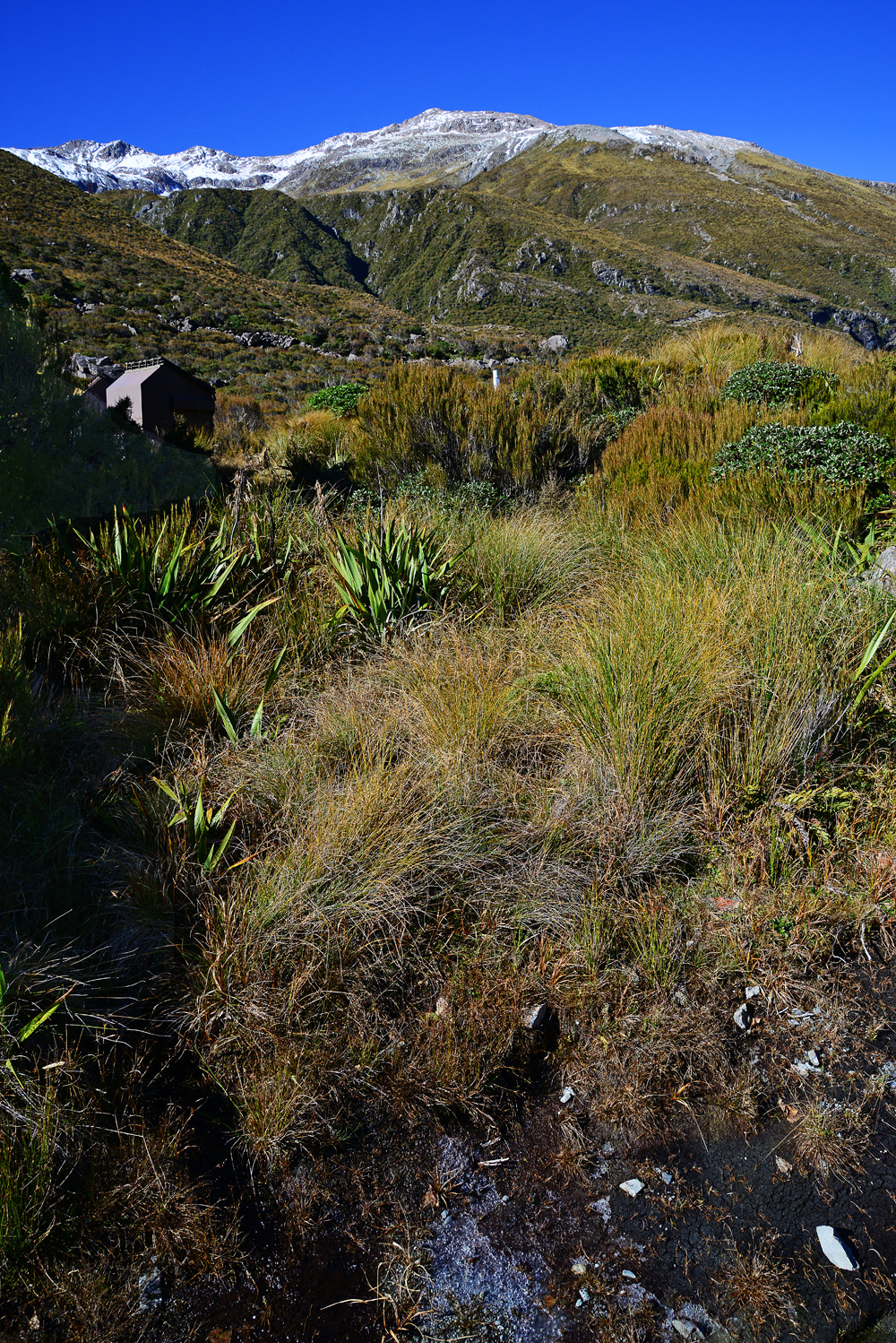 No.13  Wharariki Native Flax and Tussock