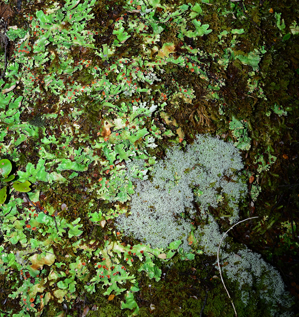 No.82  Palette of Lichen colours.