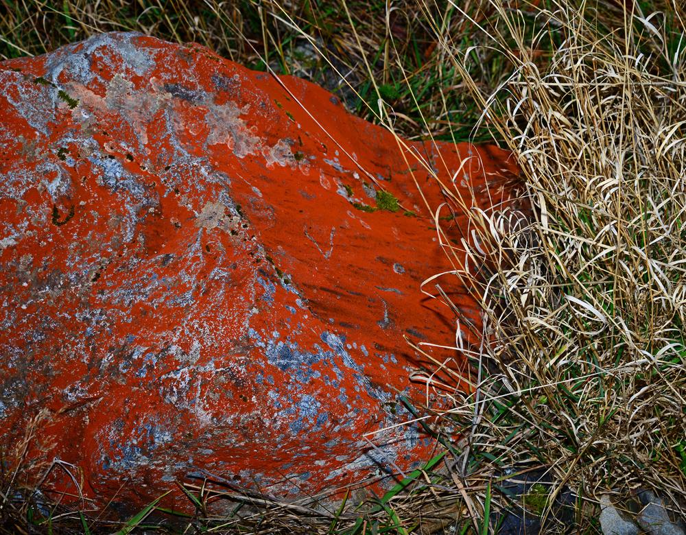 No.77   Sunburst Lichen on the Dobson Trail