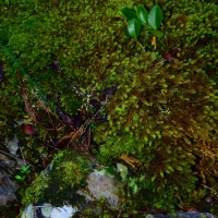 No.5 Coprosma and Moss