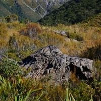 No.20 Harakeke flax on the Dobson walk trail.