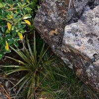 No. 47 Subtle Lichen