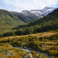 No.49 The Arthurs Pass outlooks of Dobson.