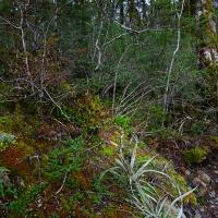 No. 62 Ground Flora cloak fallen tree.