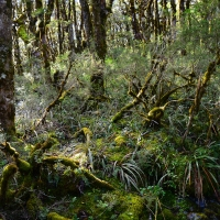 No.74 Middle Earth Forest
