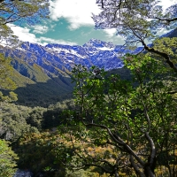 No.68 Trees frame an outlook of Southern Alps.