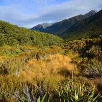 No. 50 Wharariki - flax Landscape