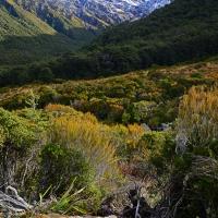 No.51 Spectacular Alpine Arthur's Pass.