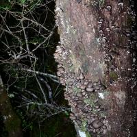 No.80 Tree Fungi