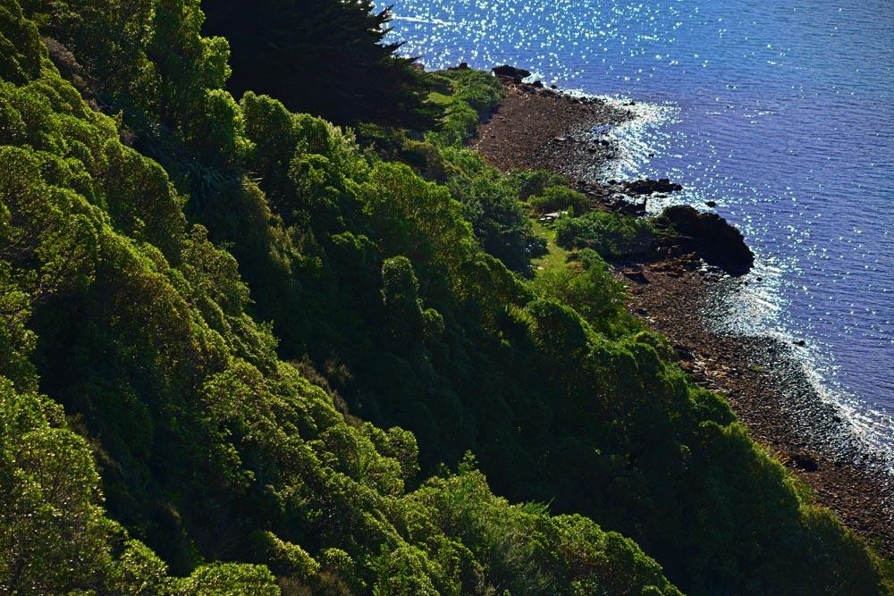 N0.19  Matiu- Somes island trail view.