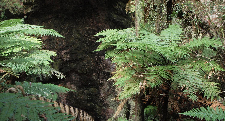 N0.8 Ferns near the Rautapu Cave entrnace