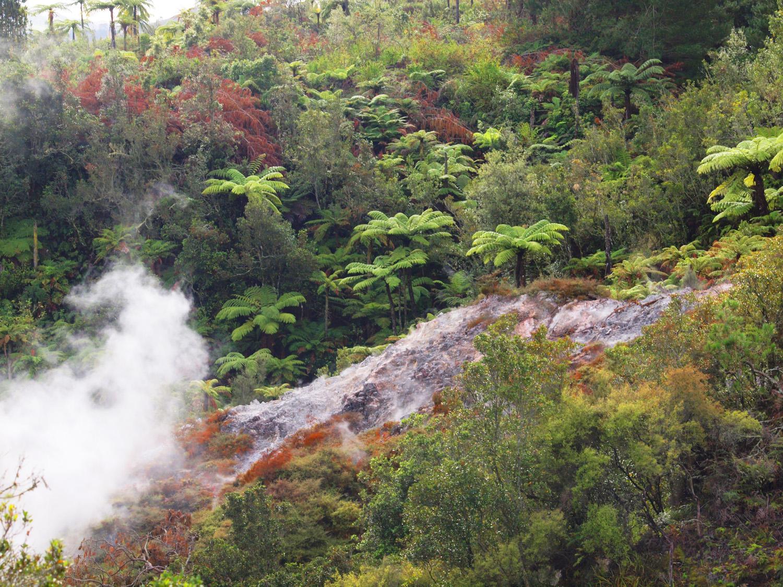N0.2   Flora growth within Orakei Korako