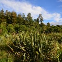 Pukaha forest - - Nikon Imaging