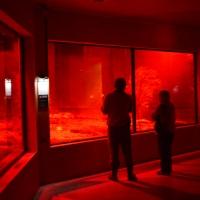 Kiwi Enclosure - Nikon Imaging