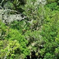 Pukaha forest -Nikon Imaging