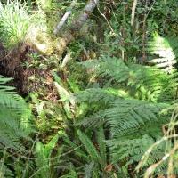 Pukaha forest - Nikon Imaging