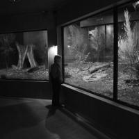 Kiwi Nocturnal enclosure - Nikon Imaging