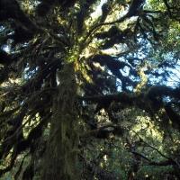 Moss on trees - Nikon Imaging