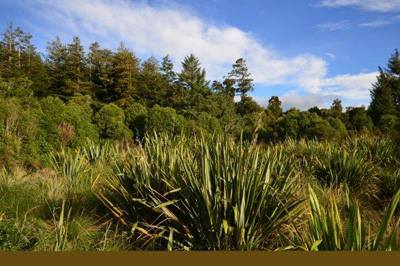Pukaha reserve