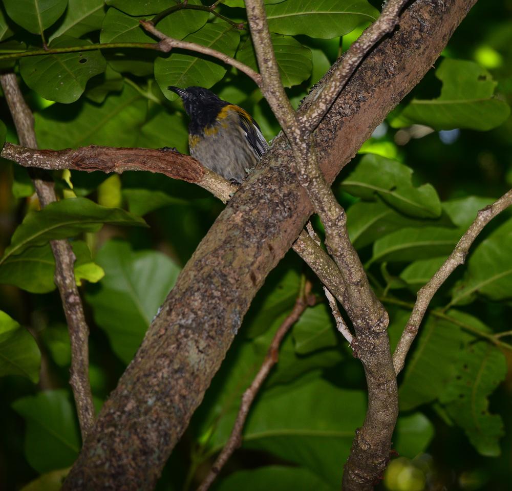 Stitch Bird