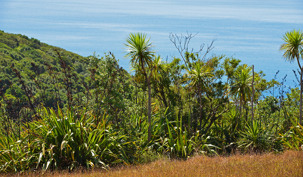 Flax and cabbage trees
