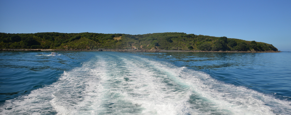 Departing view of Tiritiri Matangi