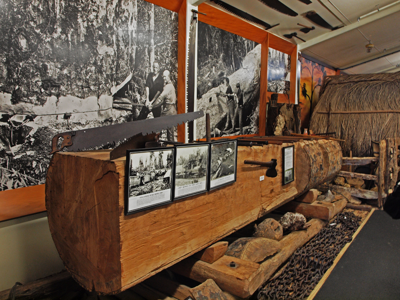 Kauri cut  log  Museum exhibtion