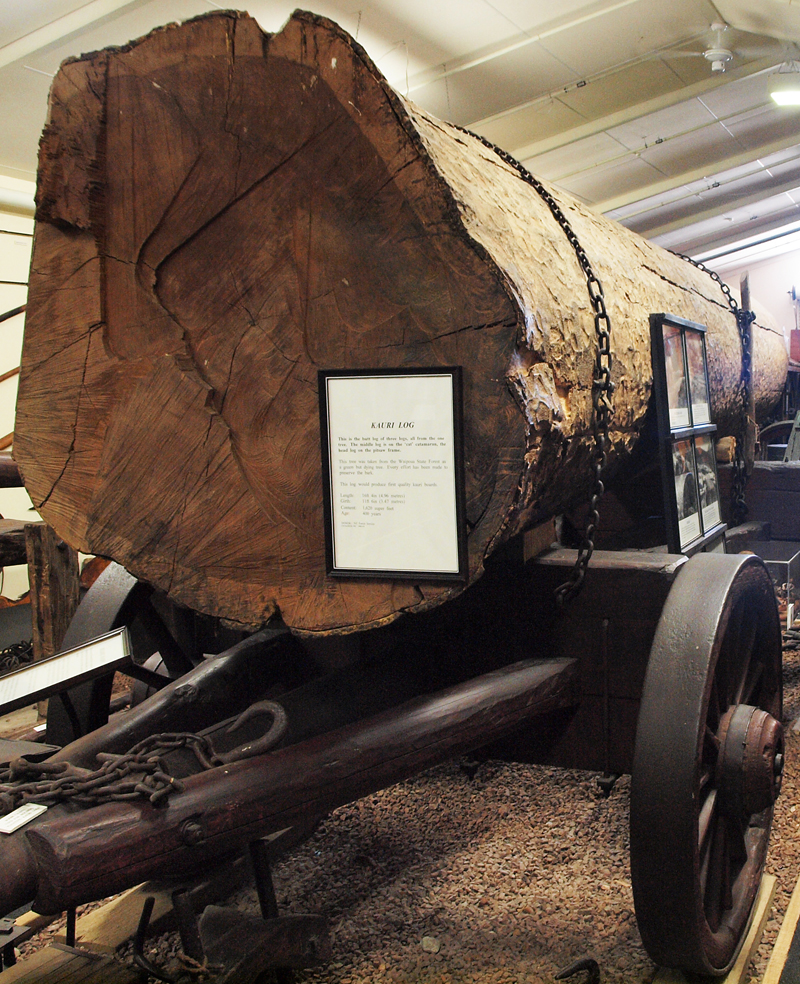 Log ready for transport by Bullock team Museum exhibtion